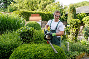 Shrub Pruning and Tree Trimming Service