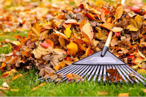 Fall & Spring Yard Cleanup Service